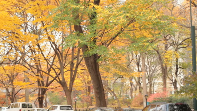 ws man jogging on road in autumn / new york city, new york, usa. - arbeitstier stock-videos und b-roll-filmmaterial