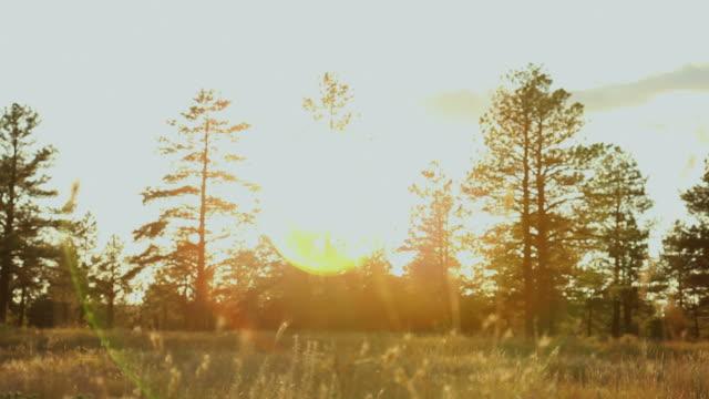ms man jogging through grassy fields at sunset / flagstaff, arizona, usa - flagstaff arizona video stock e b–roll