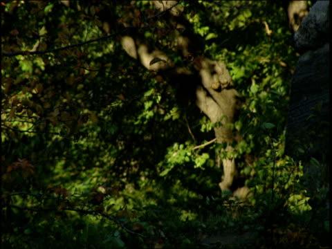 a man jogs over a footbridge. - footbridge stock videos & royalty-free footage