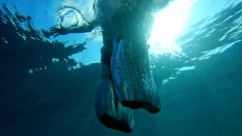 stockvideo's en b-roll-footage met man overboord springen van een zeilboot. onderwater geschoten. - fotografische thema's