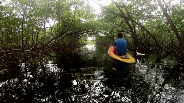 pov of man kayaking under lush mangrove forest along ocean beach. - colon stock videos and b-roll footage