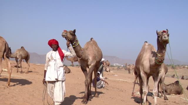 WS Man leading camel away at Pushkar Camel Fair while other men talk in background / Pushkar, Rajasthan, India