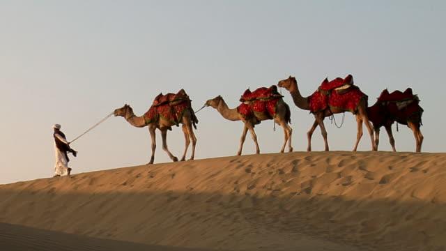 vídeos y material grabado en eventos de stock de ws, man leading camel train in sam desert, jaisalmer, rajasthan, india - cuatro animales
