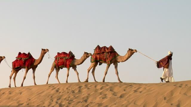 WS, Man leading camel train in Sam Desert, Jaisalmer, Rajasthan, India