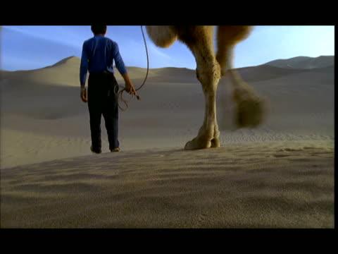 ms, cu, man leading camels across desert, gobi desert, china - arbetsdjur bildbanksvideor och videomaterial från bakom kulisserna
