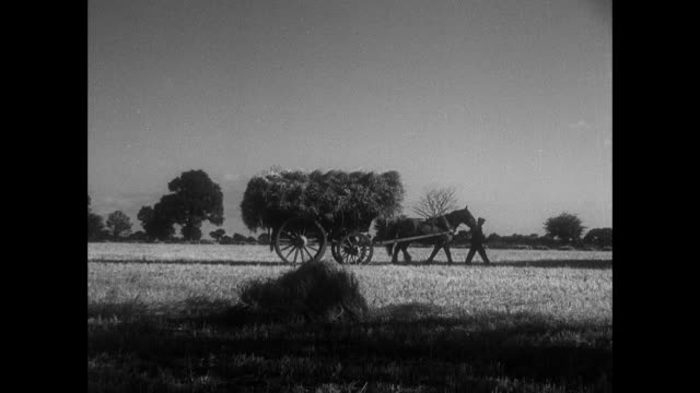 ts man leading his horse from the field with a wagon full of hay / east anglia, united kingdom - east anglia stock videos & royalty-free footage