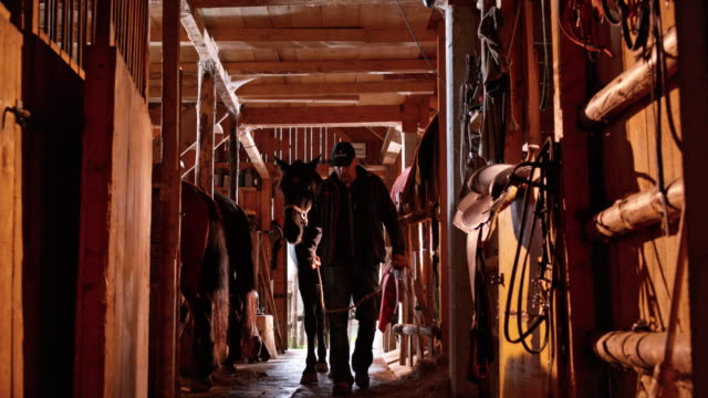 ds man leading his horse into the stall - rancher stock videos & royalty-free footage