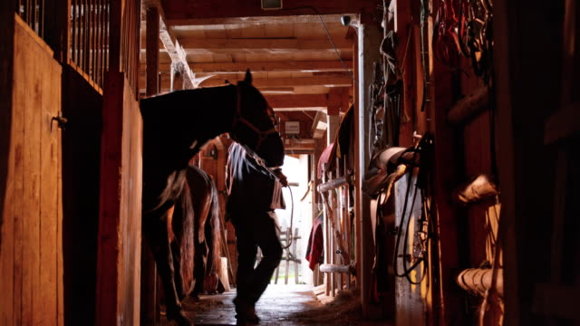 ds man leading his horse out of stall - barn stock videos & royalty-free footage
