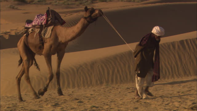 a man leads a camel through the desert landscape. - camel stock videos & royalty-free footage