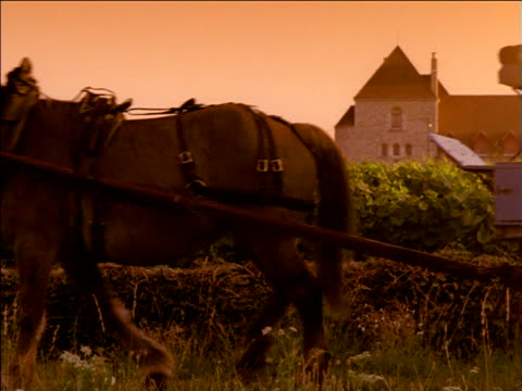 vidéos et rushes de man leads horse drawn cart carrying wine barrels along pathway turns as other man sits on edge of cart holding wine bottle, beaune, france - voiture hippomobile