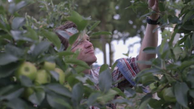 stockvideo's en b-roll-footage met man looking at apple tree - alleen één oudere man
