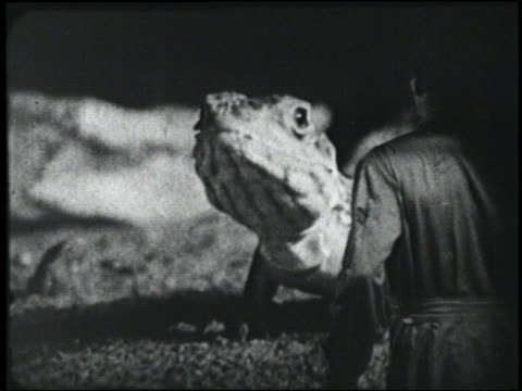 b/w 1954 rear view man (peter graves) looks at giant lizard + runs away - 1954 stock videos & royalty-free footage