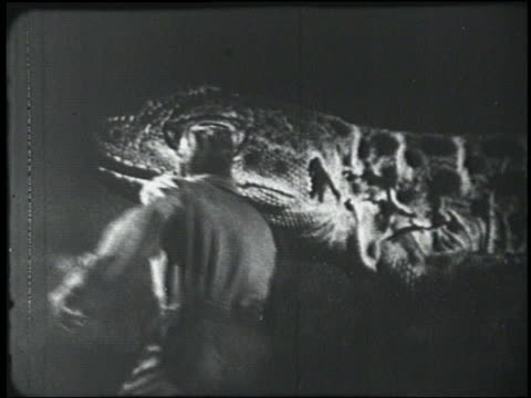 b/w 1954 rear view man (peter graves) looks at giant lizard - 1954 stock videos & royalty-free footage