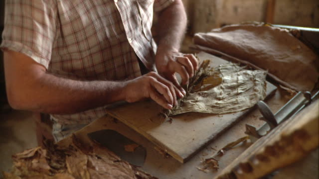 cu man making cigar with tobacco leaves / san luis, pinar del rio, cuba - cuba stock videos and b-roll footage