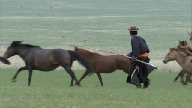 man manages to lasso running horse, inner mongolia, china - galopp gangart von tieren stock-videos und b-roll-filmmaterial