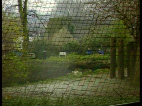 London London Zoo CMS Wire fence to lion enclosure ZOOM IN enclosure CMS Warning sign on fencing 'Do Not cross Safety Barrier' MS Wooden platforms in...