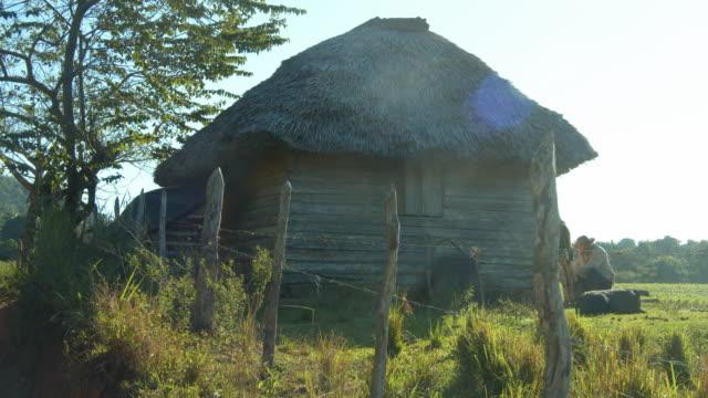 stockvideo's en b-roll-footage met man milking a cow by his hut in vinales, cuba - werkdier