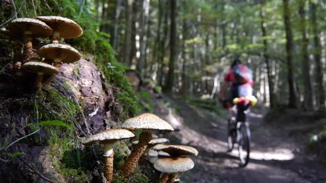 vidéos et rushes de a man mountain biking through a forest in the mountains. - faire du vélo tout terrain
