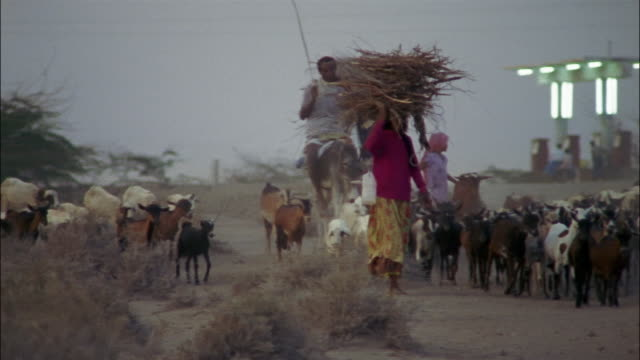 A man on a donkey herds goats as women walk along the road carrying bundles of sticks on their heads.
