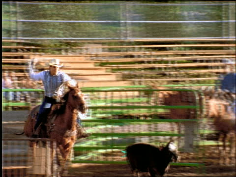 man on a horse trying to lasso calf in rodeo - 草食性点の映像素材/bロール