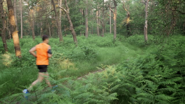 aerial man on his run through the forest - one mid adult man only stock videos & royalty-free footage