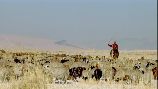 ws pan man on horse herding sheep, khustain nuruu national park, tov province, mongolia - independent mongolia stock videos and b-roll footage