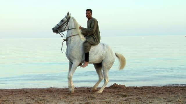 WS Man on horse on beach, Dahab, Sinai, Egypt