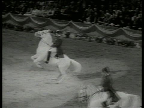 vídeos y material grabado en eventos de stock de b/w man on horse standing on hind legs / lippizan - herbívoro