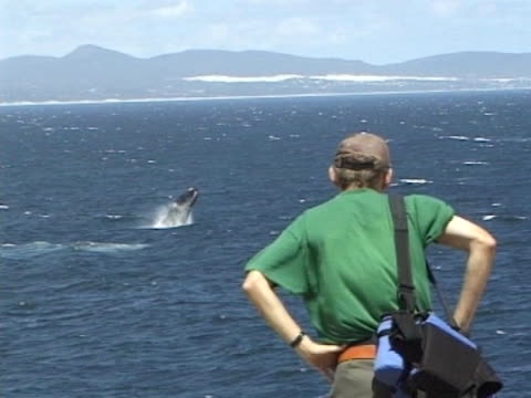 Man on rock MCU looking out to ocean, Southern Right Whale breaches in front of him