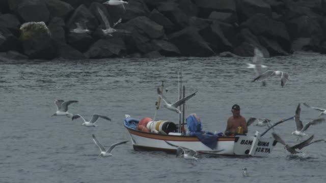 man on small fishing boat surrounded by seagulls, azores, 2012 - アゾレス諸島点の映像素材/bロール