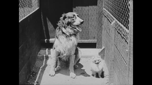 1922 man (buster keaton) opens the gates of a dog and cat hospital and hoses down a cage - dog and cat stock videos and b-roll footage