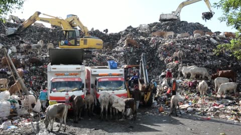 man operates an excavator as waste pickers sift through garbage and cows scavange in the trash at a landfill site in makassar, south sulawesi... - scavenging stock videos & royalty-free footage