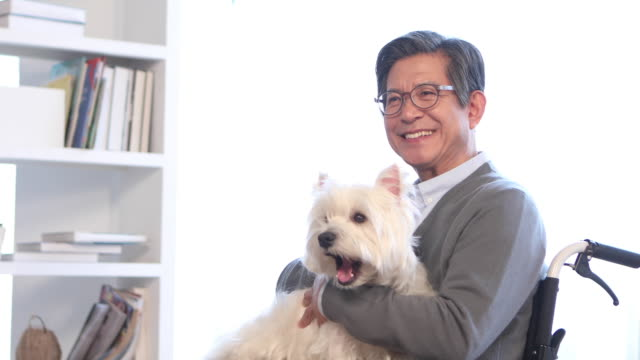man over 60 sitting and holding his dog in a wheelchair - korean ethnicity stock videos & royalty-free footage