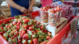 Man packing strawberries into plastic containers at a farmers' market