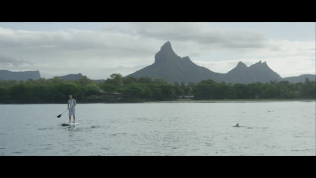 Man Paddle Boarding With Dolphins, Mauritius