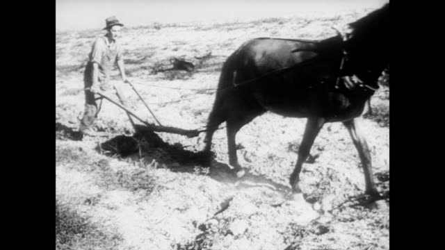 / man pets stabled horse / farmer using horse and small hand plow on uneven farm land tennessee valley authority plowing the fields on january 01... - pferdestall stock-videos und b-roll-filmmaterial