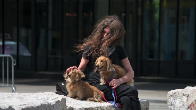 man pets two long-haired dachshunds in the meatpacking district during the coronavirus pandemic on may 14, 2020 in new york city. - long hair stock videos & royalty-free footage