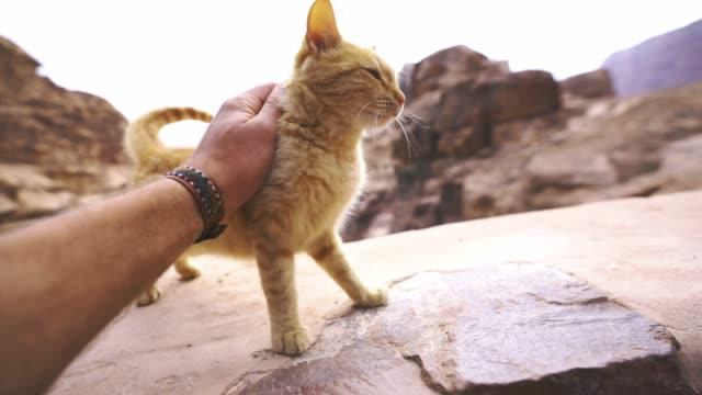 mann petting kätzchen in der nähe von petra - pfote stock-videos und b-roll-filmmaterial