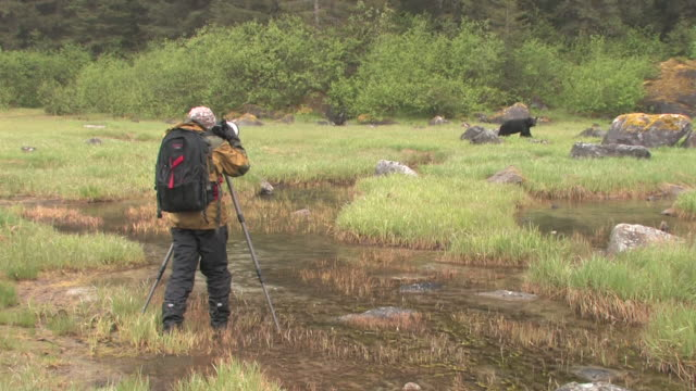 ws, man photographing american black bear (ursus americanus) in grassy field, glacier bay national park and preserve, alaska, usa - photographer stock videos & royalty-free footage