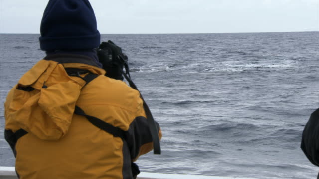 cu, man photographing bowhead whale (balaena mysticetus) swimming in ocean from ship, rear view, antarctica - 2007 stock videos & royalty-free footage