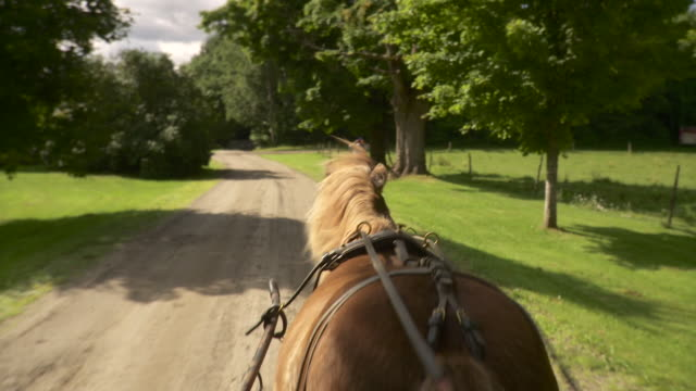 ws pov man photographing horse drawn carriage with smart phone / stowe, vermont, usa    - stowe vermont stock videos & royalty-free footage