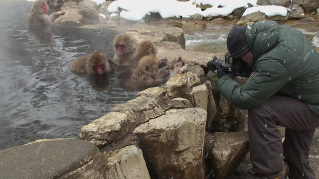 ms man photographing japanese macaques (macaca fuscata) sitting in hot spring and grooming / jigokudani, nagano prefecture, japan - photographing stock videos & royalty-free footage