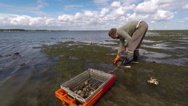man pick oysters - arcachon stock videos and b-roll footage