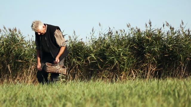 stockvideo's en b-roll-footage met ms man picking mushrooms in field / corsept, loire-atlantique, france - alleen één seniore man