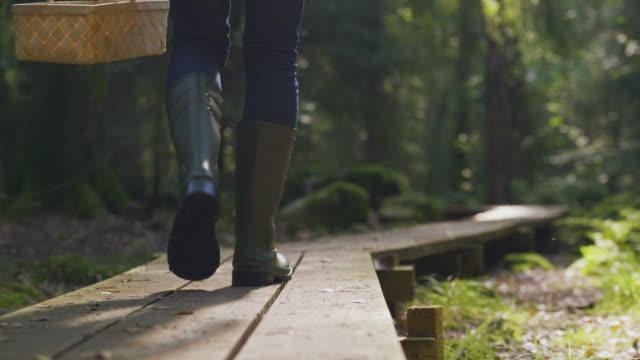 stockvideo's en b-roll-footage met mens die paddestoelen plukt die door een bos lopen - low angle view