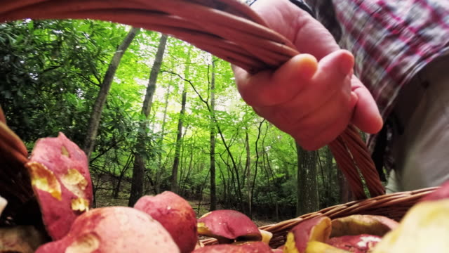 man picking wild mushrooms in the forest. computer game-like personal point of view. - mushroom stock videos & royalty-free footage