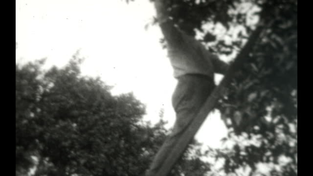 a man picks fruit in an orchard - picking harvesting stock videos and b-roll footage