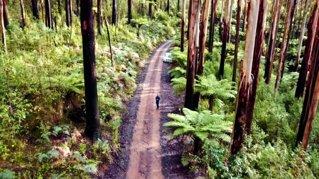 man piloting a drone in the yarra ranges national park - victoria australia stock videos & royalty-free footage