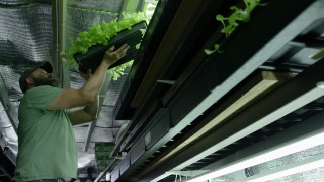 a man places plants under light - hydroponics stock videos & royalty-free footage