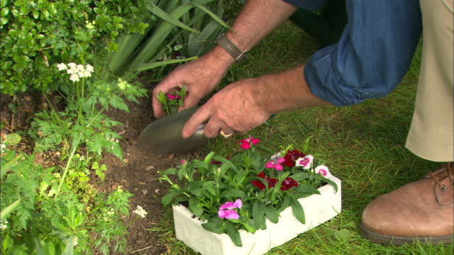 cu man planting dianthus - digging stock videos and b-roll footage